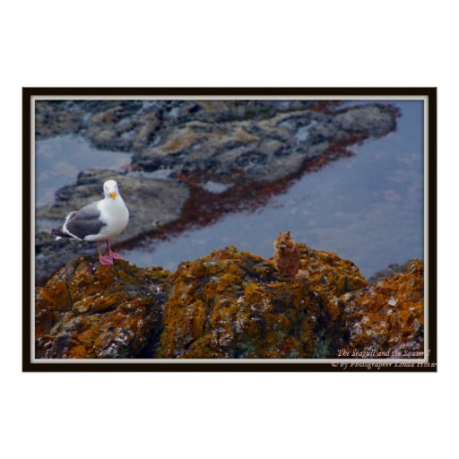 The Seagull and Squirrel Poster