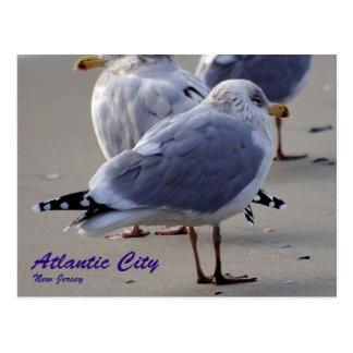The Seagulls of Atlantic City Postcard