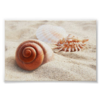 The seashells on the sand close up poster