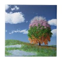 The Season Tree Decorative Tile / Trivet