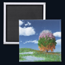 The Season Tree Magnet