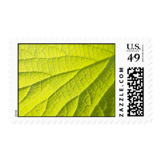 The Second Leaf Stamps