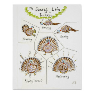 The Secret Life of a Turkey poster