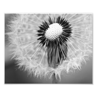 The Seeds of Tomorrow Photo Print