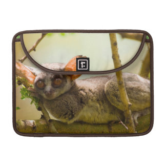 The Senegal Bushbaby (Galago Senegalensis) MacBook Pro Sleeve