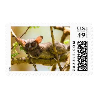 The Senegal Bushbaby (Galago Senegalensis) Postage