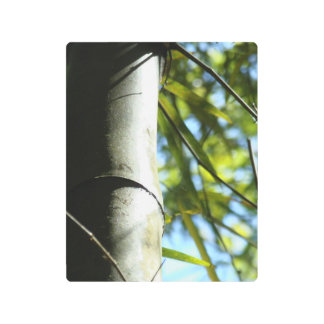 The shadows of the bamboo tree metal print