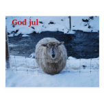 The sheep feather Christma short Postcard