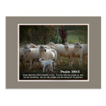 The Sheep of His PasturewScripture Post Cards