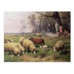 The Shepherd's Family Postcards