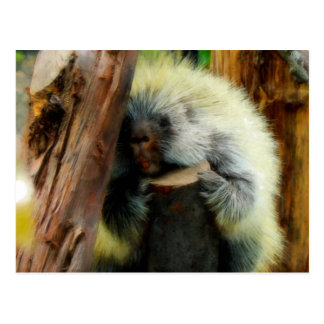 'The Shy Porcupine' post card