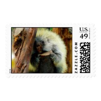 'The Shy Porcupine' postage