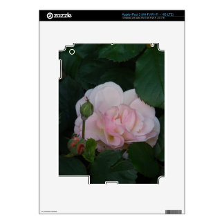 The shy rose decal for iPad 3