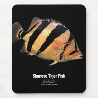 The Siamese tiger fish Mouse Pad