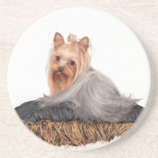 The Silky Terrier Beverage Coaster
