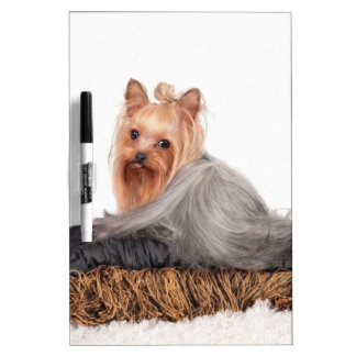 The Silky Terrier Dry-Erase Board