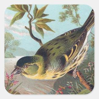 The Siskin Vintage Bird Illustration Square Sticker