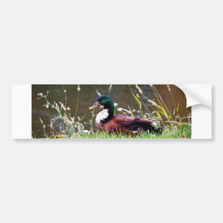 The Sitting Duck Bumper Stickers