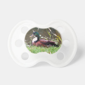The Sitting Duck Baby Pacifiers