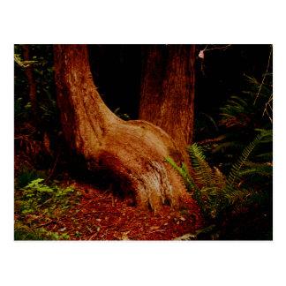 The Sitting Tree Postcard