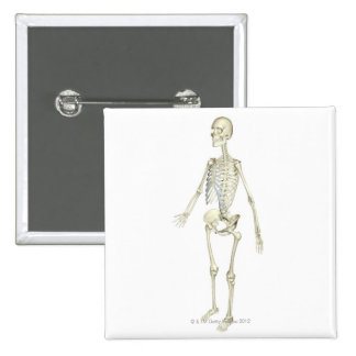 The Skeletal System Button