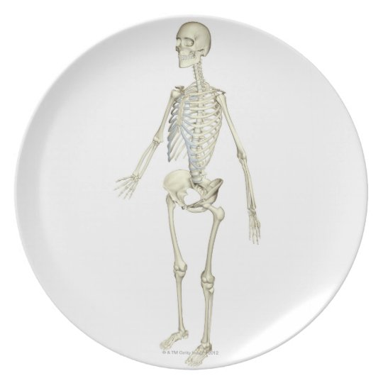 The Skeletal System Dinner Plate