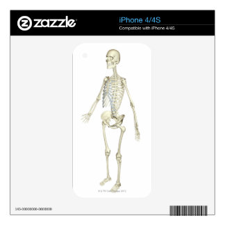 The Skeletal System iPhone 4S Decal