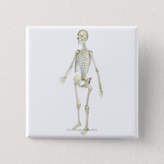 The Skeletal System Pinback Button