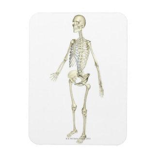 The Skeletal System Vinyl Magnets