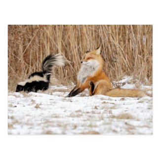 The Skunk Gives The Fox A Bad Day Postcard