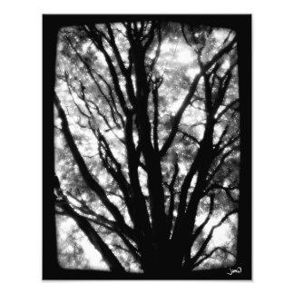 The Sky With Diamonds (No. 1) Photo Print