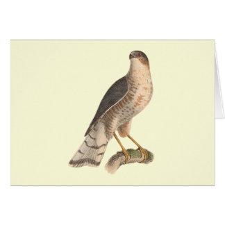 The Slate-colored Hawk(Astur fuscus) Greeting Card