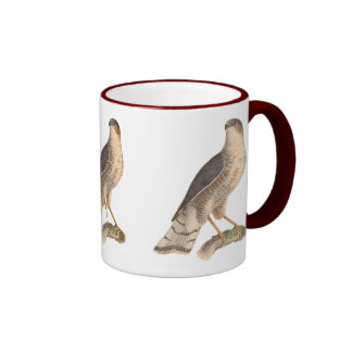 The Slate-colored Hawk(Astur fuscus) Mugs