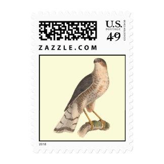 The Slate-colored Hawk(Astur fuscus) Stamps