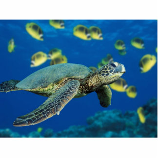 The slowest Green Sea Turtle Statuette