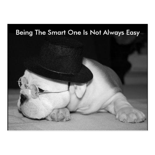 """The Smart One""...English Bulldog Puppy Postcard"