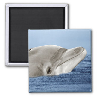 The smiling dolphin 2 inch square magnet