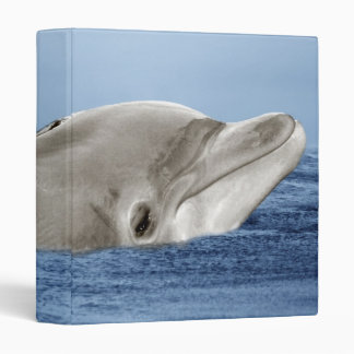 The smiling dolphin binder
