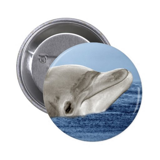 The smiling dolphin pinback button