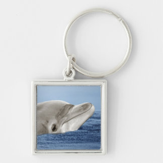 The smiling dolphin keychain