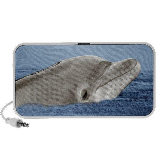 The smiling dolphin laptop speaker