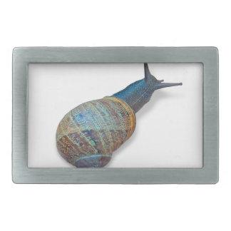 The snail belt buckle