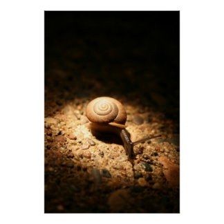 the snail posters