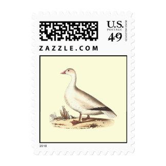 The Snow Goose (Anser hyperboreus) Postage Stamp