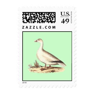The Snow Goose (Anser hyperboreus) Postage Stamps