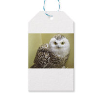 The Snowy Owl Gift Tags