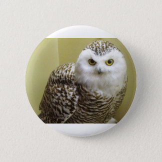 The Snowy Owl Pinback Button
