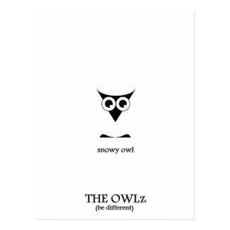 The snowy Owl Postcard