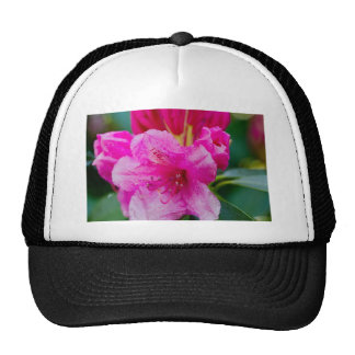 The solitary pink flower trucker hat