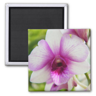 The Song Of The Orchid 2 Inch Square Magnet